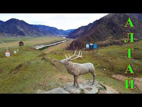 Горный Алтай, весна, цветущие горы, цветение маральника