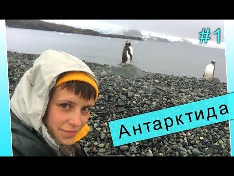 Как попасть в Антарктиду. Личный опыт путешественницы