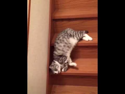 Кот нашел необычный способ спускаться по лестнице