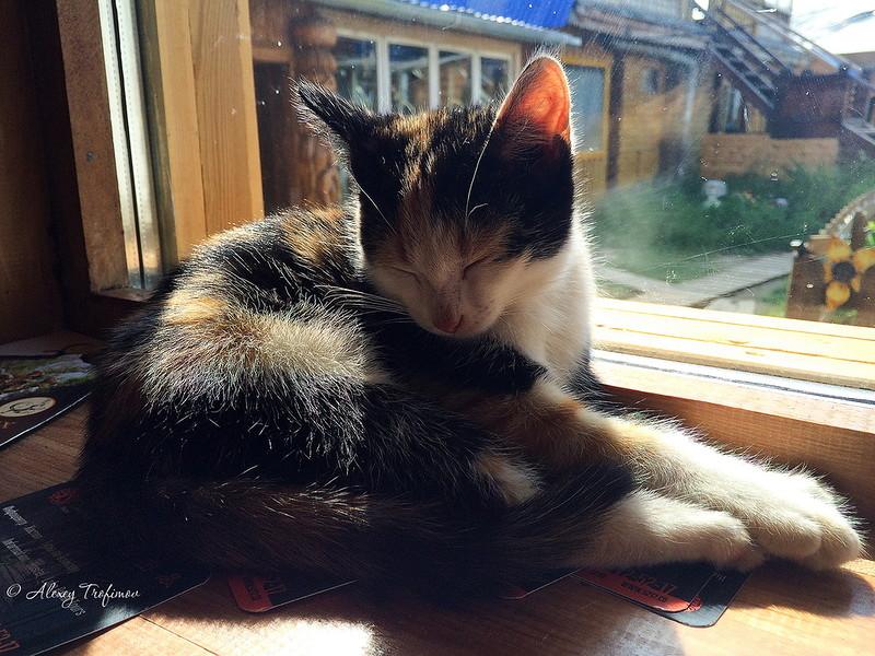 Коты Байкала