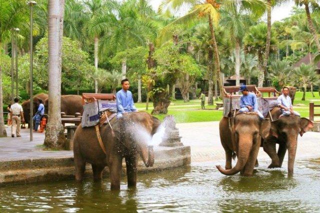 Бали: карманные слоны райского острова