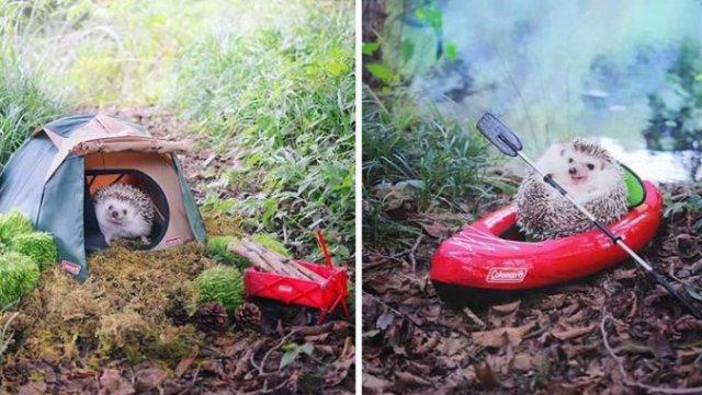 Ежик-фотомодель учит людей путешествовать