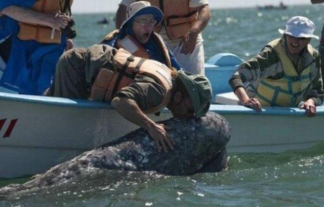В Калифорнии туристов могут оштрафовать за чрезмерные нежности с китом