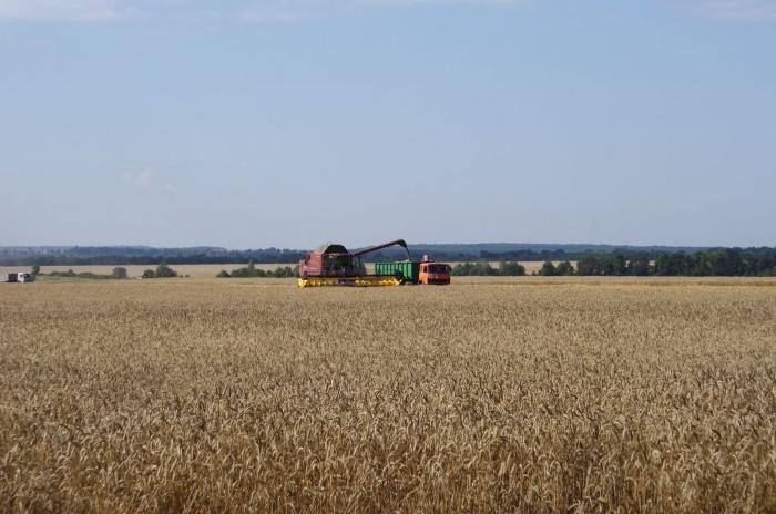 В Крыму гибнет урожай озимых и яровых культур