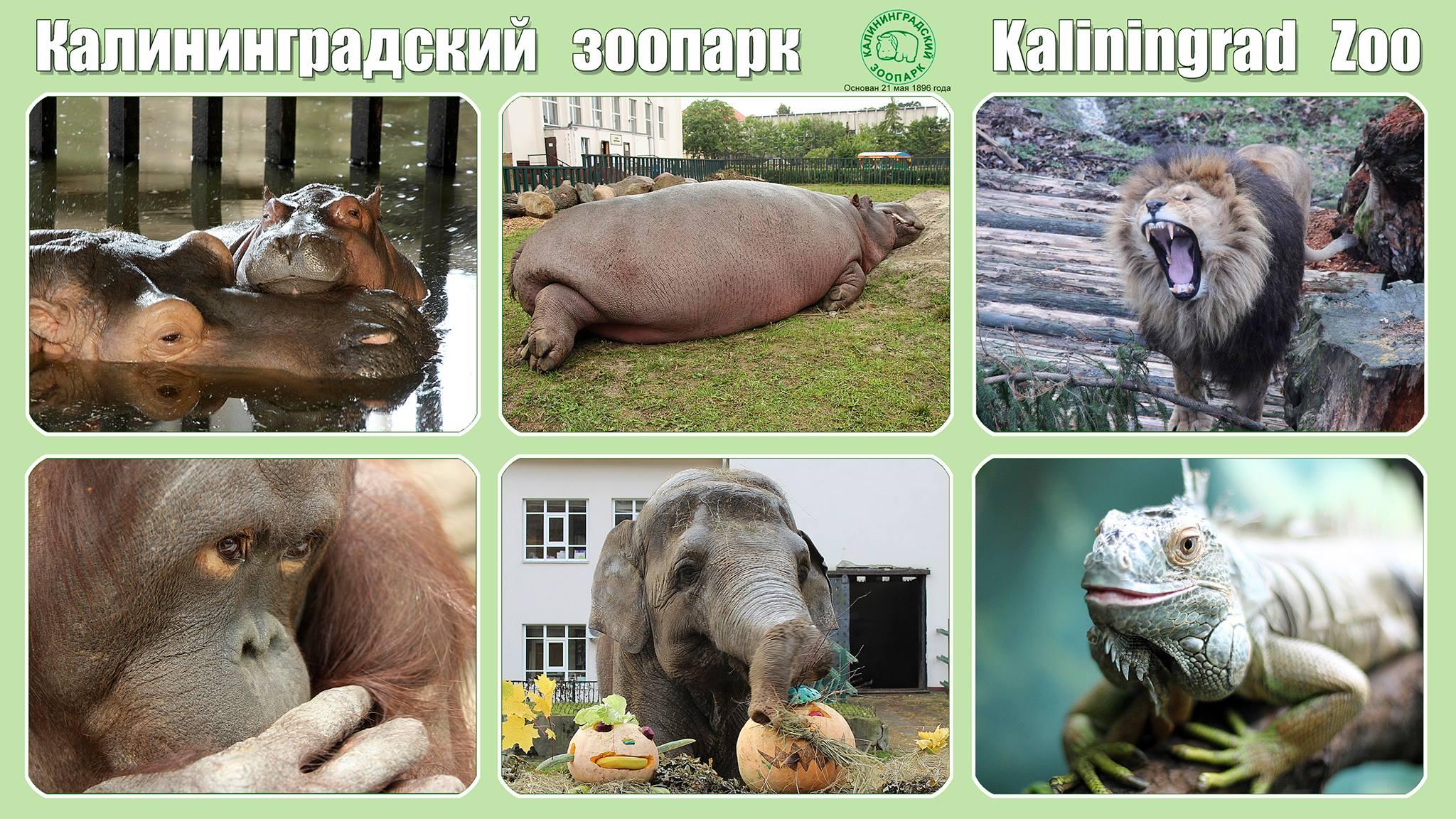 122 года Зоопарку! Поздравляем!