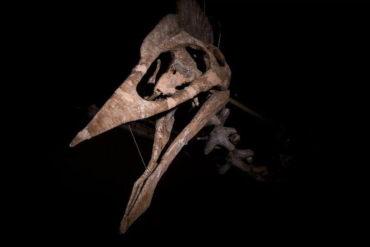 В Трансильвании нашли крупнейшую челюсть птерозавра