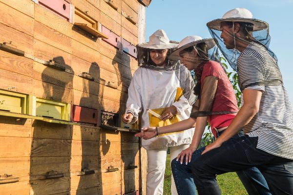 20 мая Словения готовится отметить Всемирный день пчел