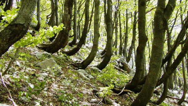 Лес в Хорватии вошел в список Всемирного наследия ЮНЕСКО