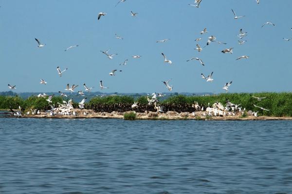 Туры на пеликаньи острова организовали в Омской области