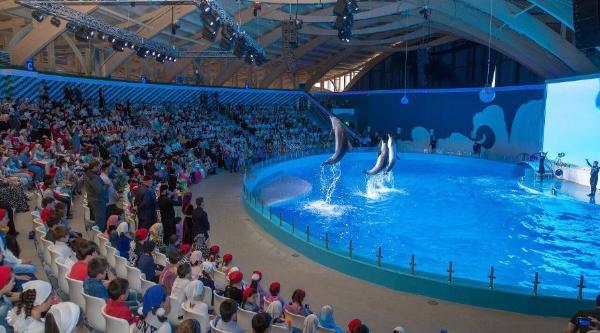В Чечне открылся первый в СКФО дельфинарий