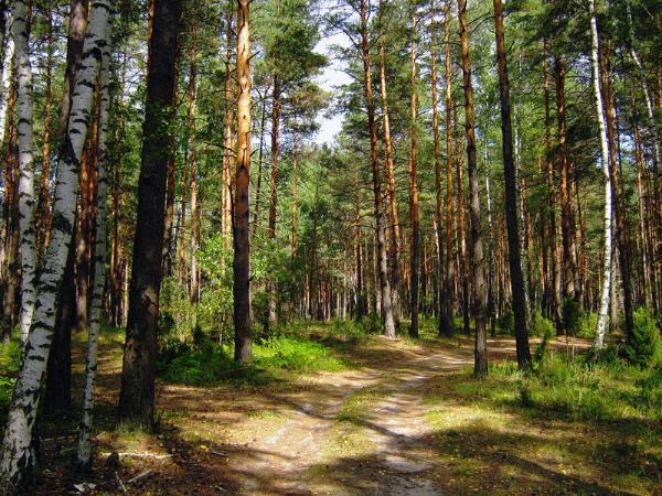 Автопробег по заповедникам Центральной России проложит новый туристический маршрут