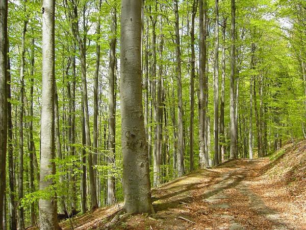 Хорватский лес стал наследием ЮНЕСКО