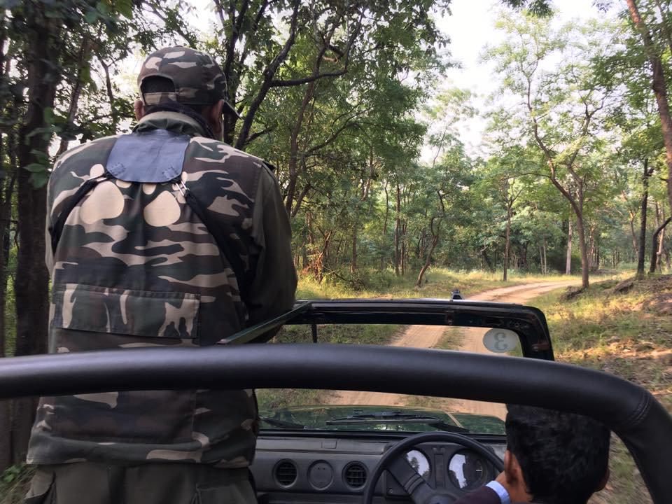 Индия. В поисках тигра