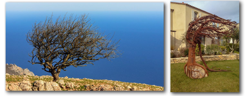 500-летняя олива на вершине скалы Ильяс-Кая. Крым