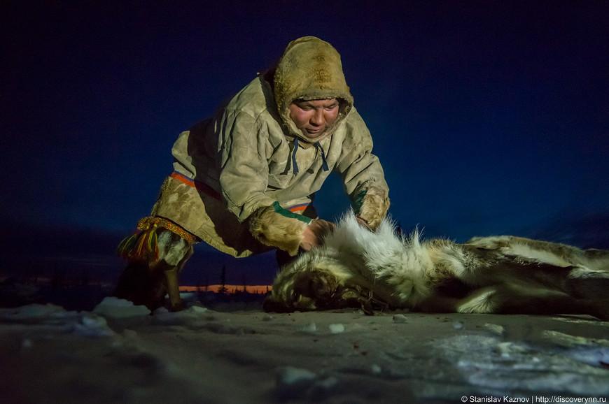 Заготовка мяса оленя на Ямале