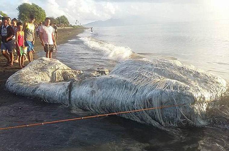Неизвестное морское чудище напугало жителей Филиппин