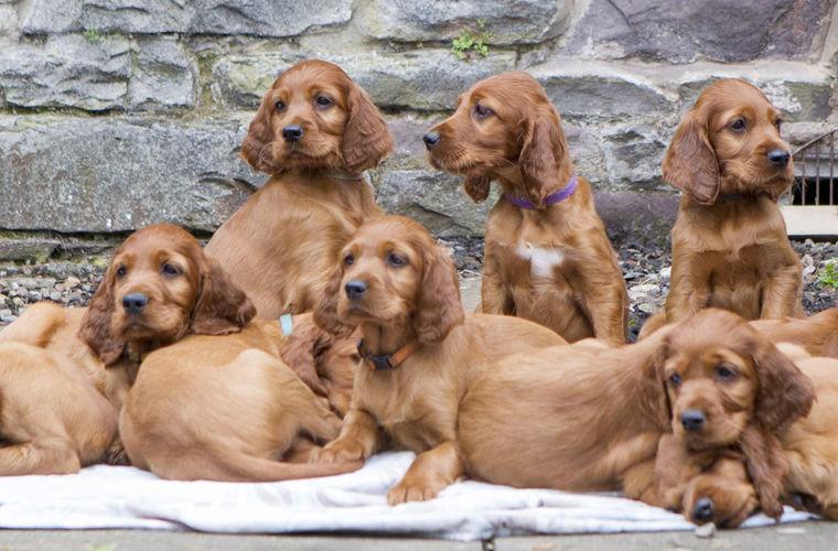 11 собак приехали к маме на свой день рождения