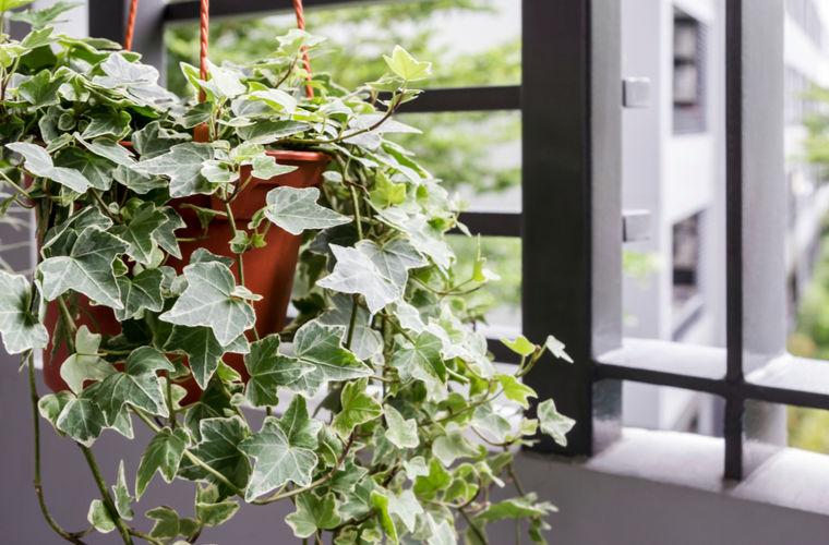 Ученые назвали пользу комнатных растений