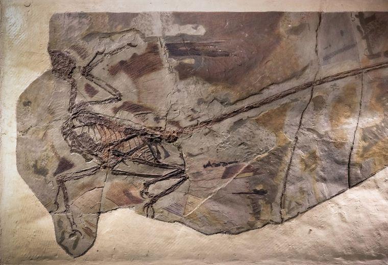 Нашли древнейшую в мире перхоть