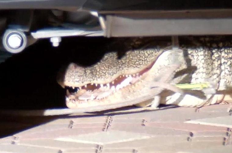 В Техасе аллигатор прятался под внедорожником