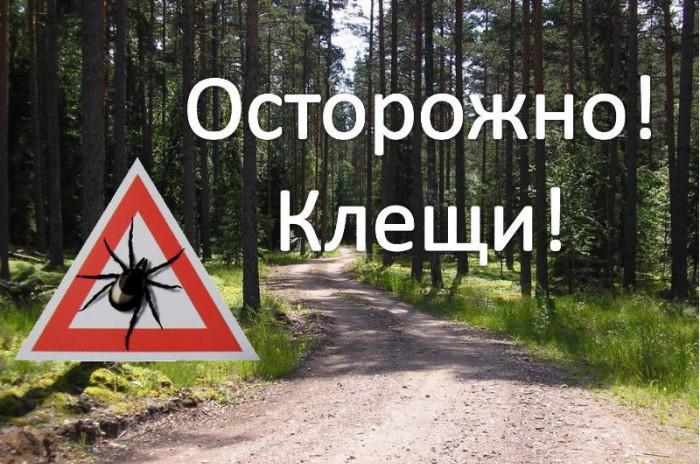Уже более тысячу крымчан покусали клещи