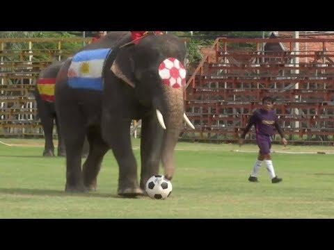 В Таиланде футболисты сыграли со слонами