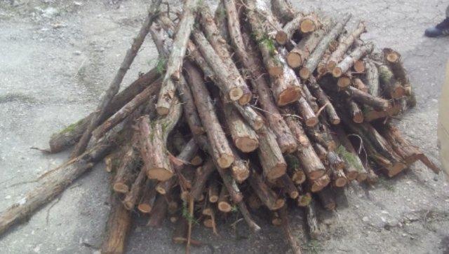 Двум браконьерам грозит тюрьма за вырубку можжевельника под Бахчисараем