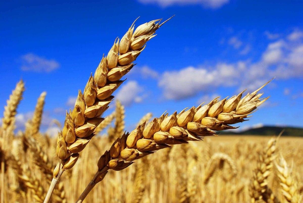 Севастополь начинает поставку зерна в Сирию