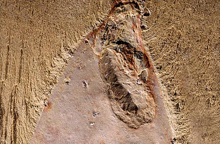 В окаменелостях нашли родственника Спанчбоба