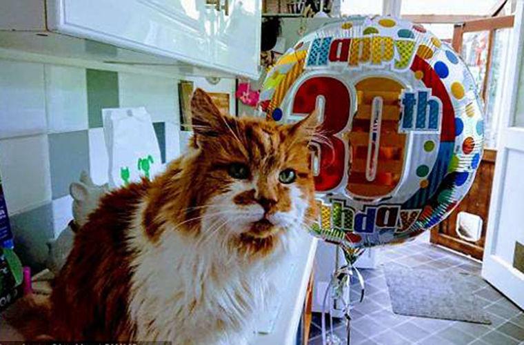 Кот Щебень отпраздновал 137 лет по человеческим меркам