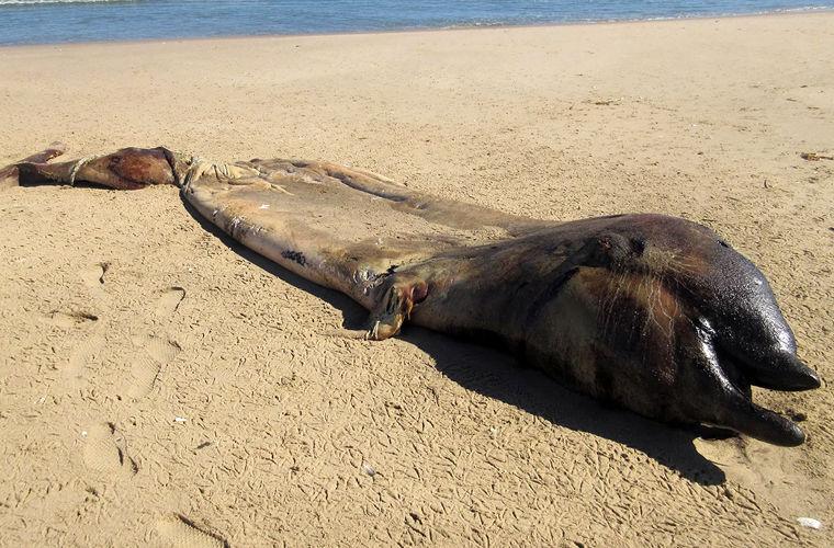 Тело загадочного морского существа выбросило на побережье Намибии