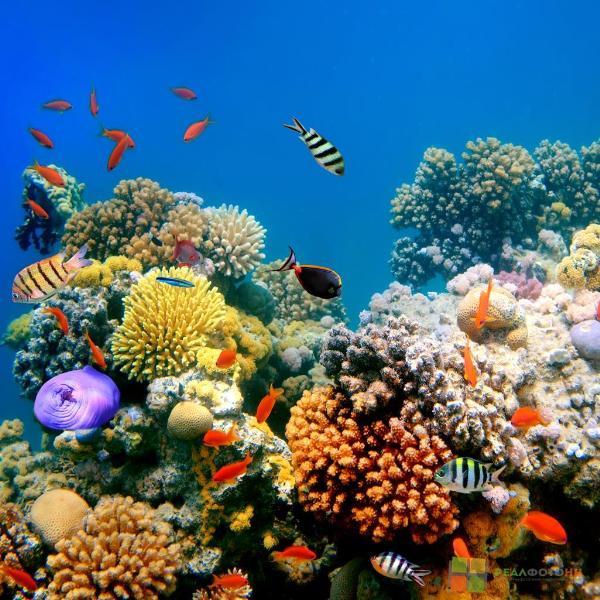 У берегов ОАЭ появится крупнейший искусственный коралловый риф