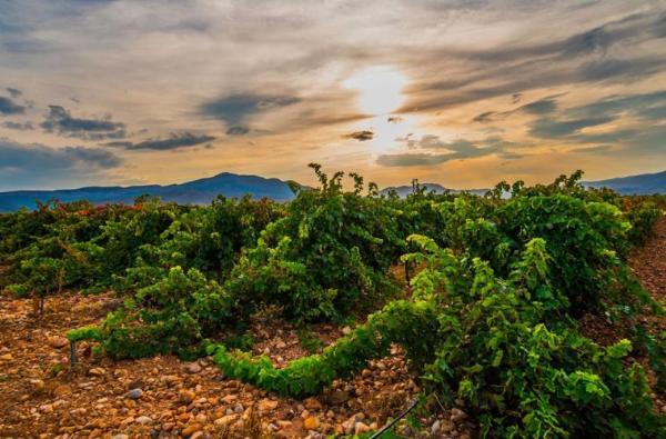 В Испании открыли два новых винных маршрута
