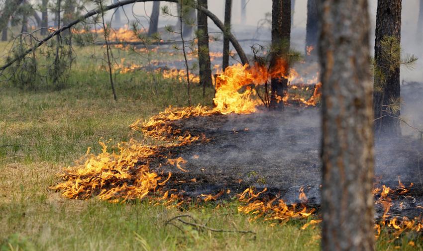 В Крыму запретили посещение лесов