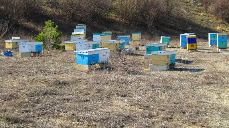Крымские фермеры опрыскали ядохимикатами поля с пчёлами – убытки огромны