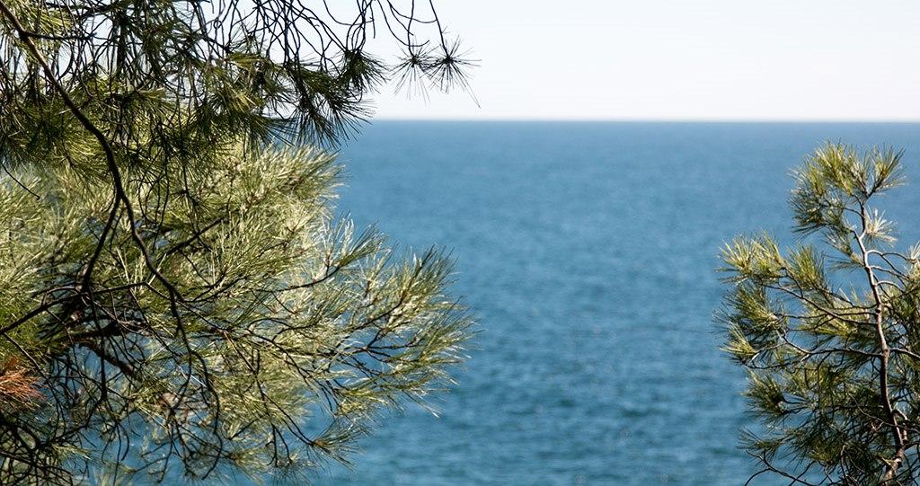 Крымчанин захватил под Алуштой участок с видом на море