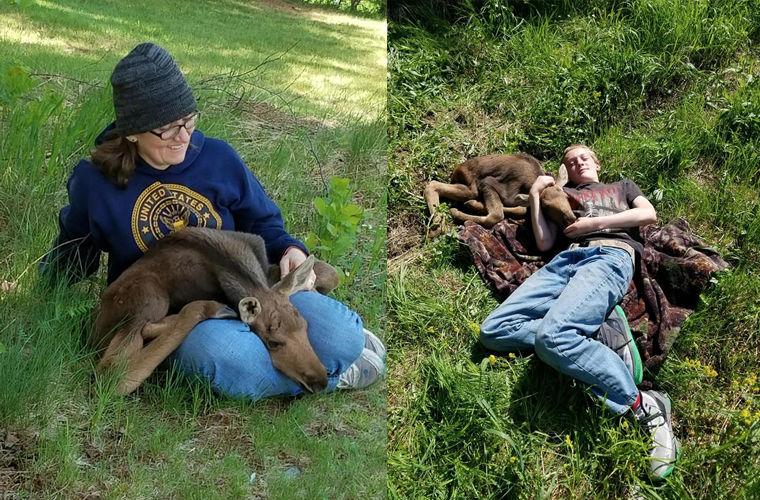 Собака отыскала брошенного лосенка, и они мгновенно подружились