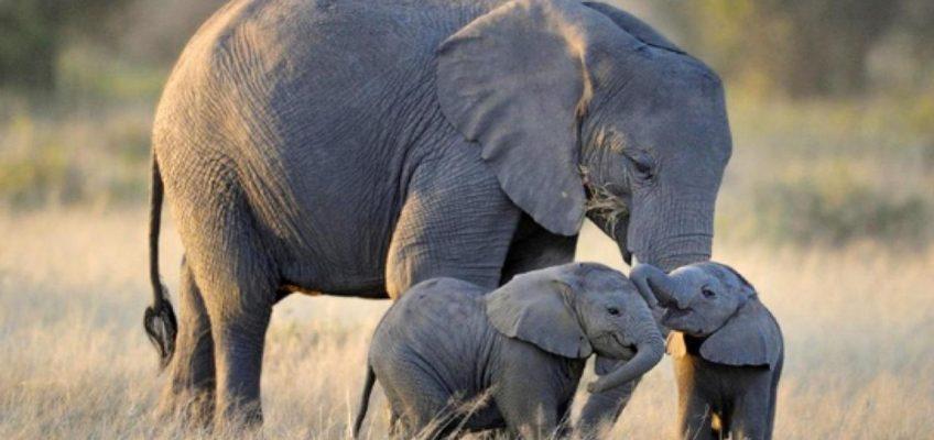 Где слону жить хорошо — в Таиланде!