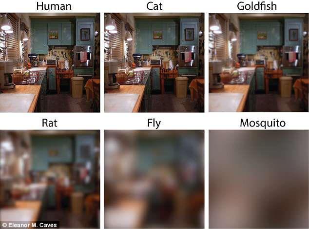 Ученые показали, как животные видят мир