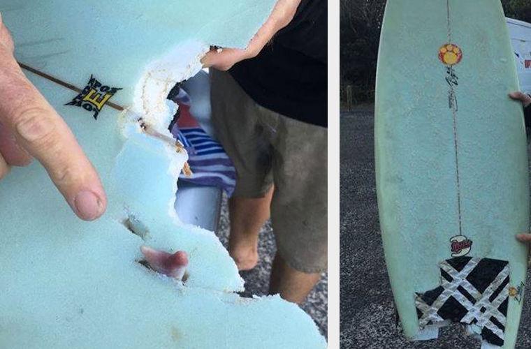 Акула потеряла зуб в сражении с серфингистом