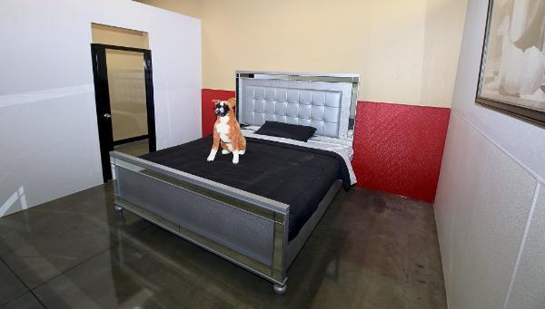 В Калифорнии открыли отель для собак с бассейном и спортзалом