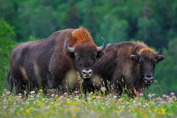 Кавказский заповедник создал 18 экологических маршрутов для туристов Сочи