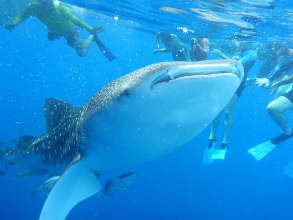 Пуститься вплавь с акулами вместе с Silversea Expeditions