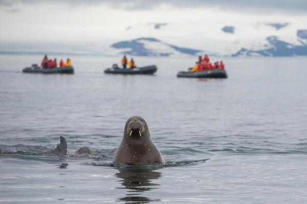 Кабмин внес в Думу законопроект о правовом регулировании круизного туризма в Арктике и ДФО