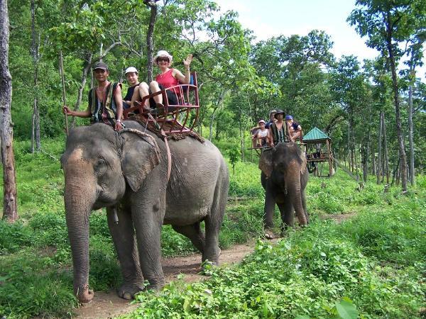 Туристам запретили кататься на слонах в национальном парке Йок Дон во Вьетнаме
