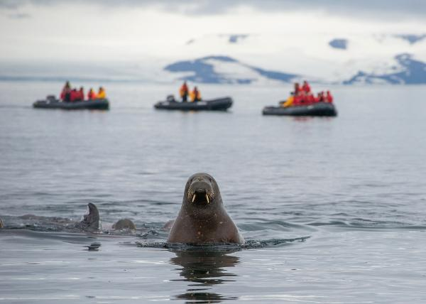 Партнерство «Северо-Запад» и Республика Коми будут развивать туризм и проекты в Арктике