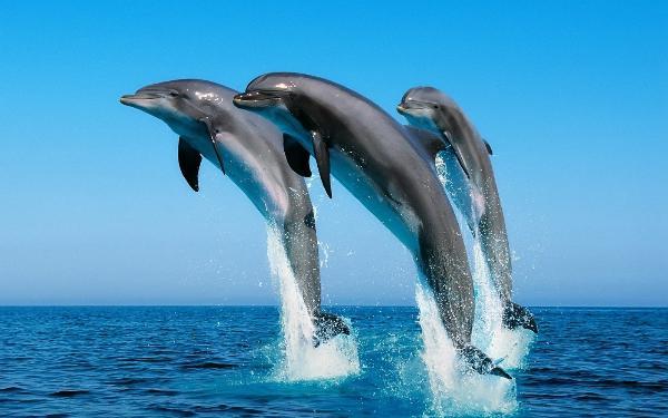 В Сочи впервые отметят Всемирный день китов и дельфинов
