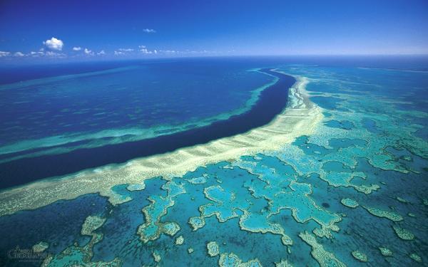 В Австралии будут стрелять солью в небо, чтобы спасти Большой Барьерный риф