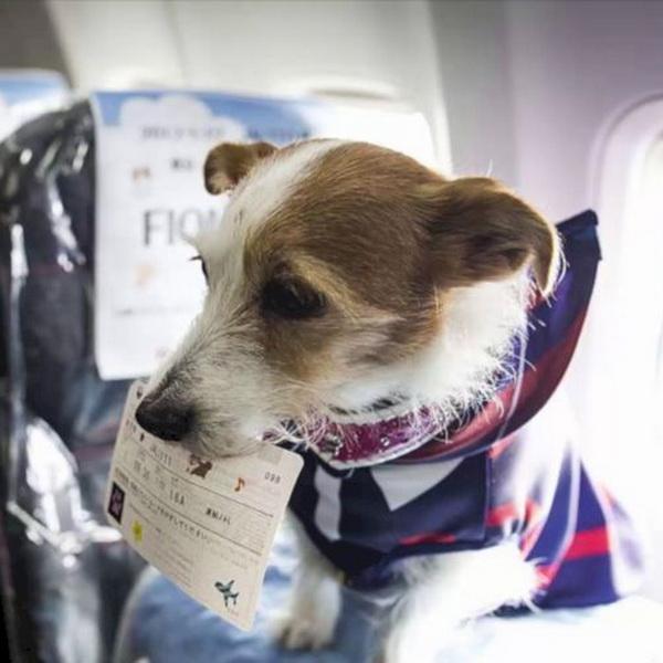 Собака открыла багажный отсек пассажирского самолета при подлете к Москве
