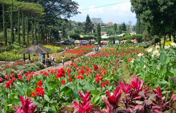 Остров Сулавеси приглашает на цветочный праздник в Томохоне